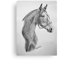 """Argentinian Beauty"" - Criollo mare Canvas Print"