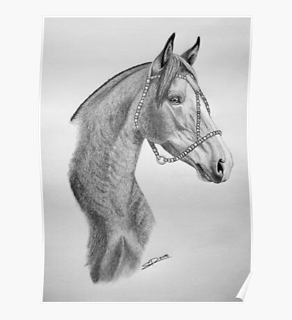 """""""Argentinian Beauty"""" - Criollo mare Poster"""
