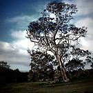 the tree at wiraway by Shannon Byous Ruddy