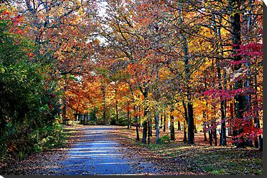 Fall Walk on Country Lane by Ginger  Barritt