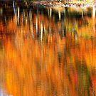 Autumn Reflection by Ginger  Barritt