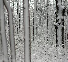 Winter 7 by Kurt Kamka