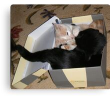 Box Fighting Wild Bill Hickock kitten and Matilda Canvas Print