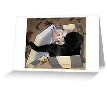Box Fighting Wild Bill Hickock kitten and Matilda Greeting Card