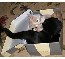 Box Fighting Wild Bill Hickock kitten and Matilda Photographic Print
