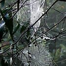 Cobwebs by Stormswept