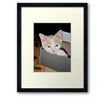 Ah this box is comfy Wild Bill Hickock Kitten Framed Print