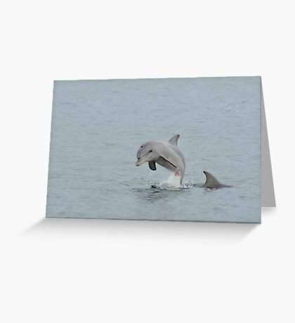 Leaping Dolphin Greeting Card