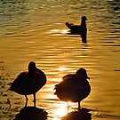 Ducks in Gold by Anatoliy