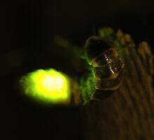 glowworm by mtths