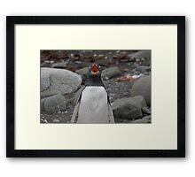 Penguin Opera Framed Print