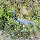 Blue Heron by Donna Adamski