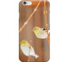 American Gold Finch iPhone Case/Skin