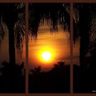 Cape Coral Sunrise  by Virginia N. Fred
