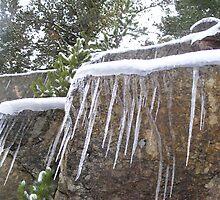 Ice by Elizabeth Stevens