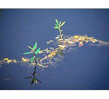 New Swamp Growth Photographic Print