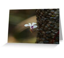 Cycad orchid Greeting Card