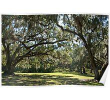 Oaks of Avery Island Poster