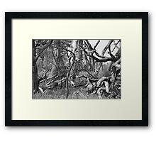 Kudu playing peek a boo Framed Print