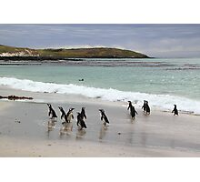 Magellanic Penguins on the Beach Photographic Print