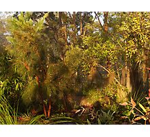 """""""Tranquil""""......... Photographic Print"""