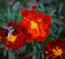 A Fall Feast Of Marigolds...  by Angela Lance