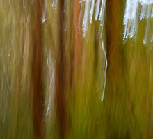 Vertical Trunks by Gabby Lewis