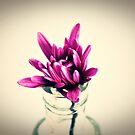Vintage Pink by Gretchen Dunham