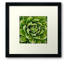 Cactus Hypnosis Framed Print