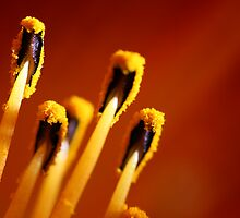 Matchsticks by Gabby Lewis