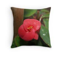 Euphorbia Flower Throw Pillow
