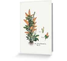 Vegetabilis Pizzarius Greeting Card