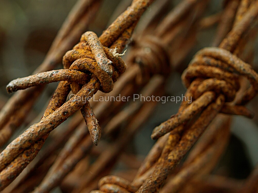 Barbed wire macro by GayeLaunder Photography