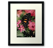 Janius Patch Butterfly Framed Print