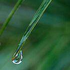 Palm drop by gamaree L