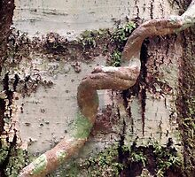Nature's Tree Art by Clare Colins