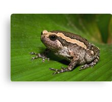 Asian Bullfrog Canvas Print