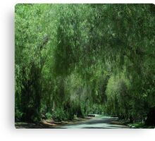 Elegant Weeping Willow Trees....... Canvas Print