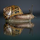 Reflections of a Snail by Pene Stevens
