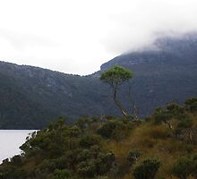 Lone Tree at Cradle Mountain by cradlemountain