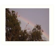 Bunch of galahs! Art Print