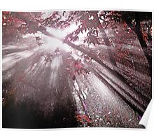 Sun rays through rain Poster