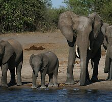 Elephants by the River by dulkeith