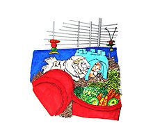 Guinea Pigs in a cage Photographic Print