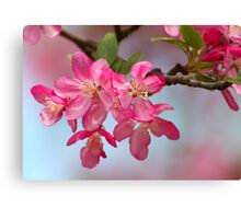 FLOWERING CRABAPPLE BLOSSOMS Canvas Print