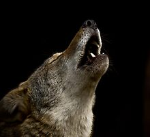 Howling at the Moon by Debbie Bryant