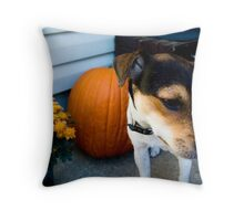 jack/rat terrier Throw Pillow