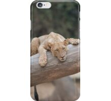 Young female lion chilling out iPhone Case/Skin