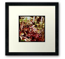 Ttv: Fresh Berries Framed Print