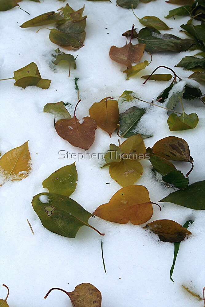 Lilac Leaves On Snow  by Stephen Thomas